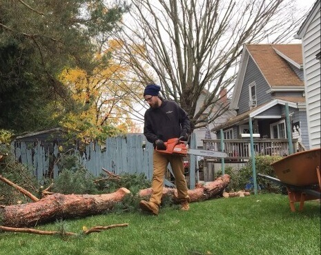 tree-working-logging-trees-man-industrial-chainsaw-blue-collar-tree-removal