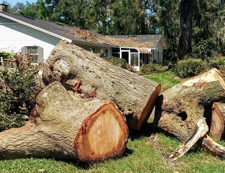 hurricane-damaged-tree-removal