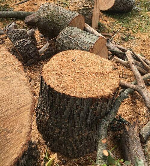 stump-removal-service