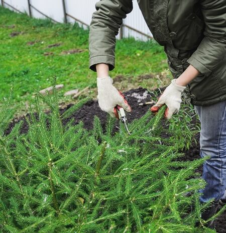 women-cutting-small-plants-with-scissors